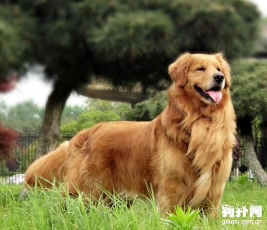 狗狗秋季养护常识分享